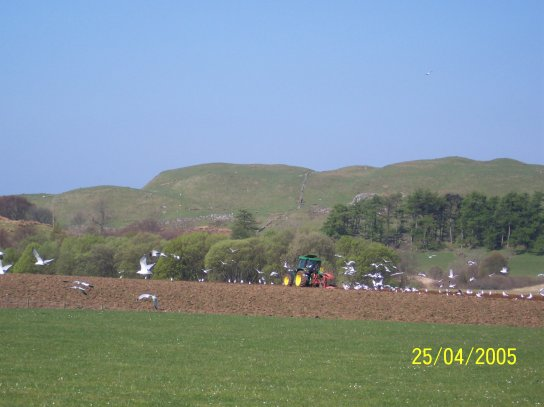 April 05, The ploughing