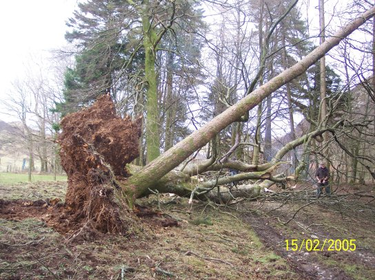 February 05, The fallen trees in the woods